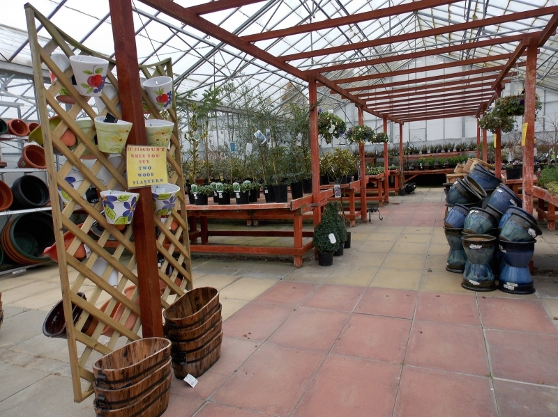 Sherington Plant Shop
