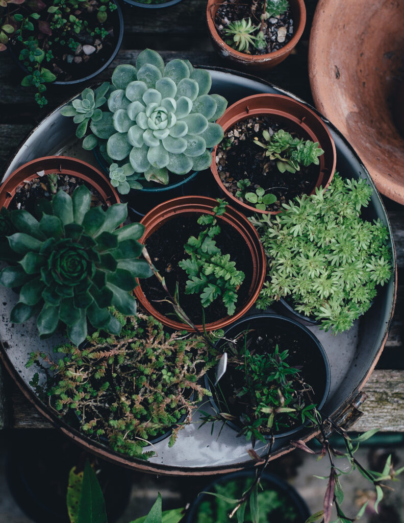 lots of potted plants